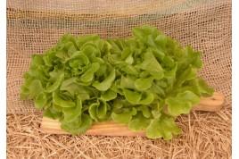 Alface Salanova Mix (Hidropônica)