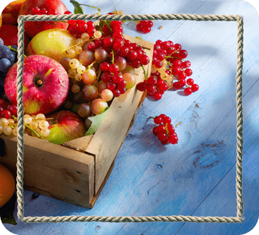 UTO Frutas e Legumes - Goiania