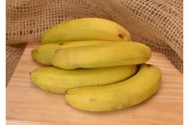 Banana - nanica