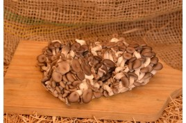 Cogumelo - Shimeji