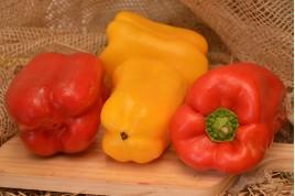 Pimentão colorido